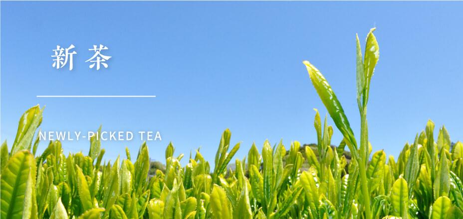 【かねじょう・茶の庭】採れたて新茶